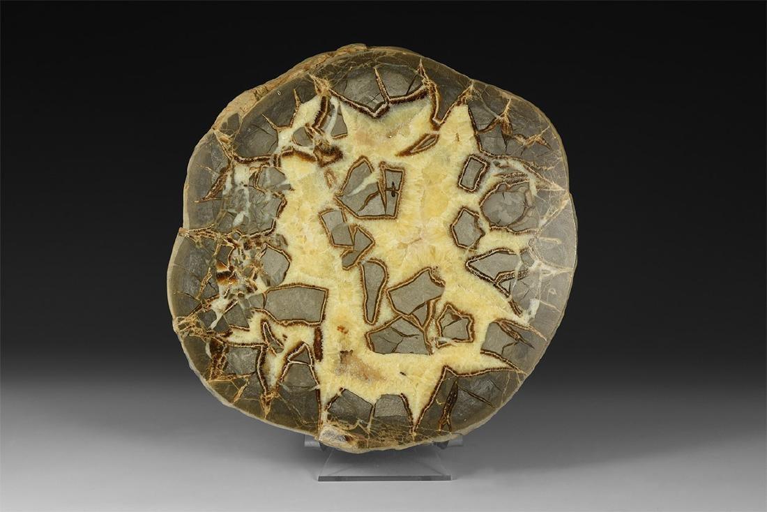 Large Polished Septarian Nodule Display Piece.