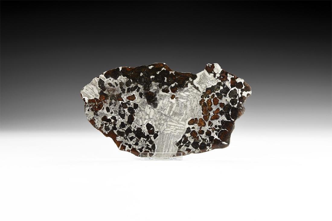 Natural History - Polished Seymchan Meteorite Slice