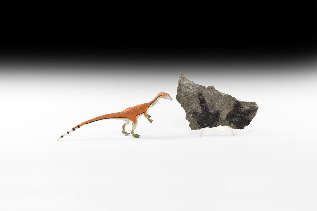 Carnivorous Dinosaur Fossil Foot Prints