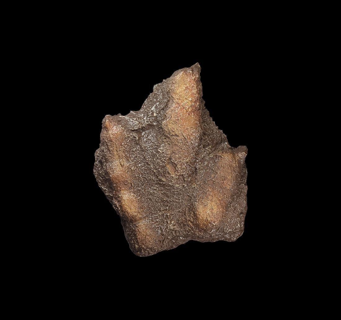 Dilophosaurus Dinosaur Footprint Replica.