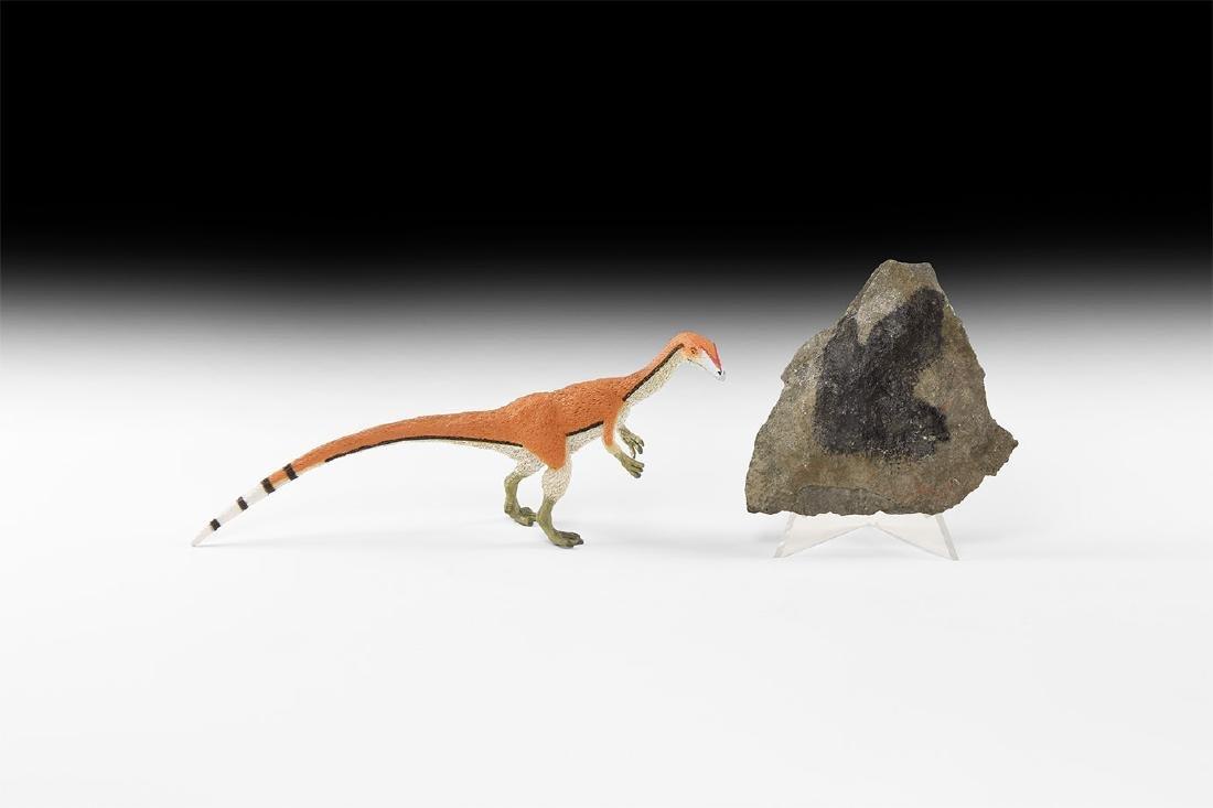 Natural History - Dinosaur Fossil Footprint