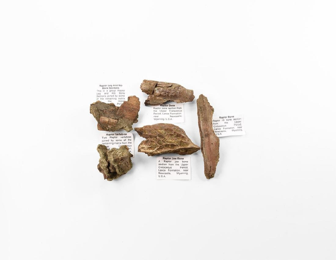 Raptor Dinosaur Fossil Bone Group