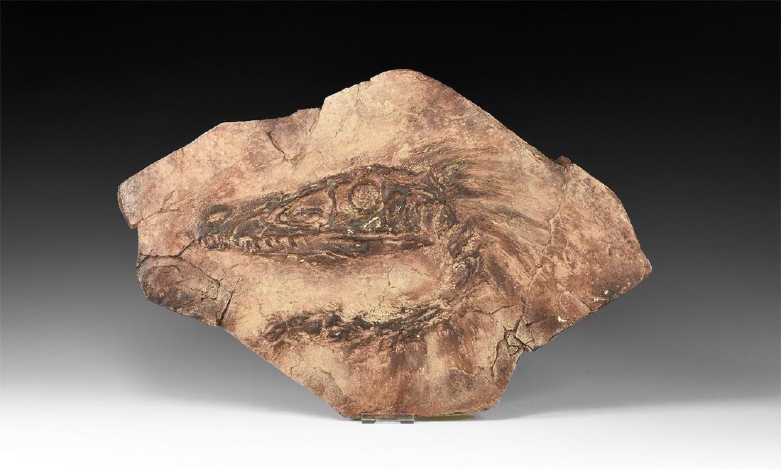 Velociraptor Skull Matrix Replica.