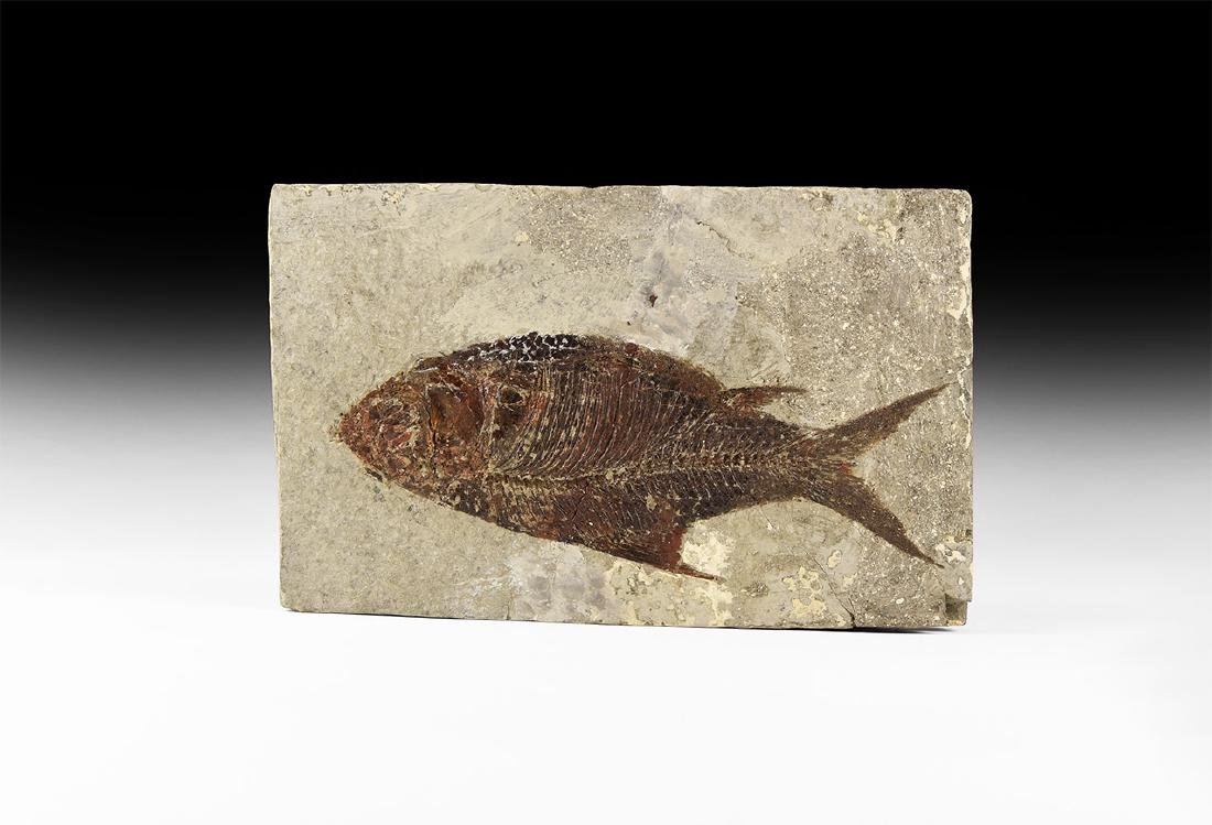 Natural History - Jianghanghichthys Fossil Fish