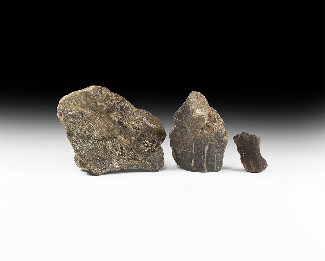 Iguanodon Fossil Dinosaur Bone Group