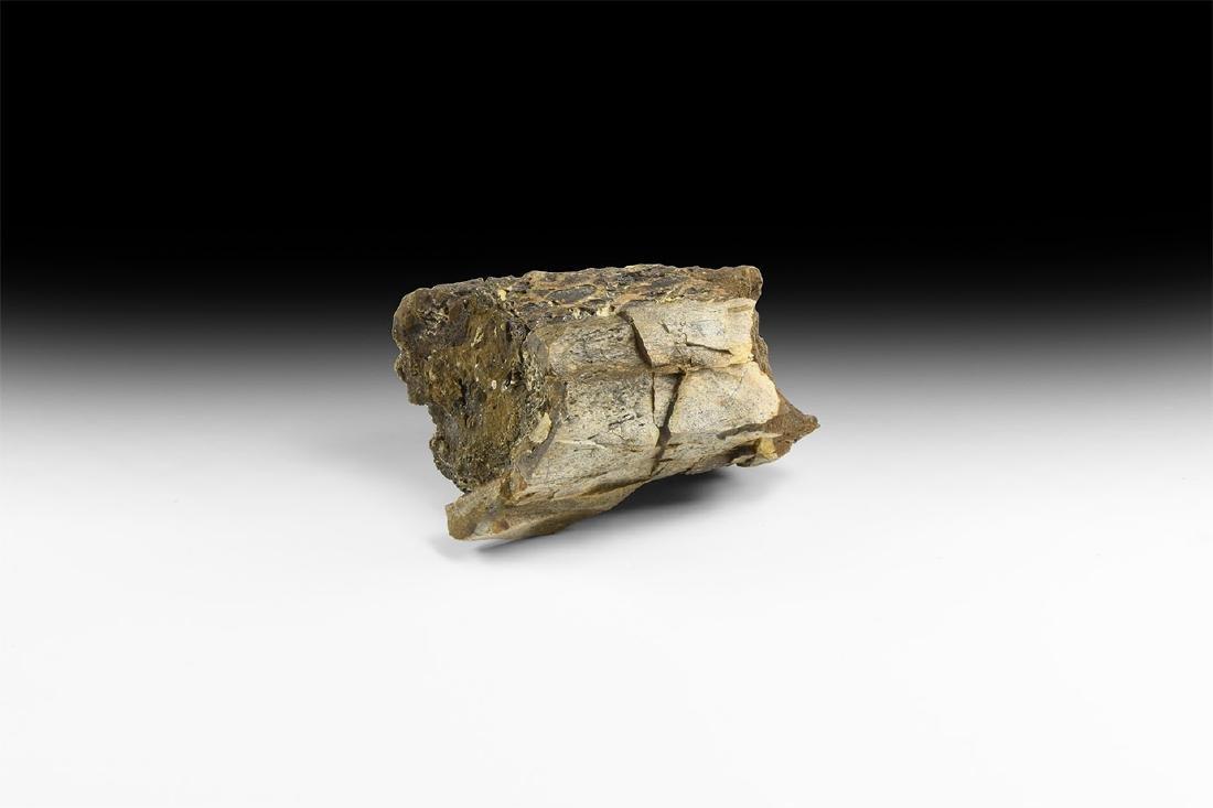 Tyrannosaurus Rex Dinosaur Fossil Bone Piece