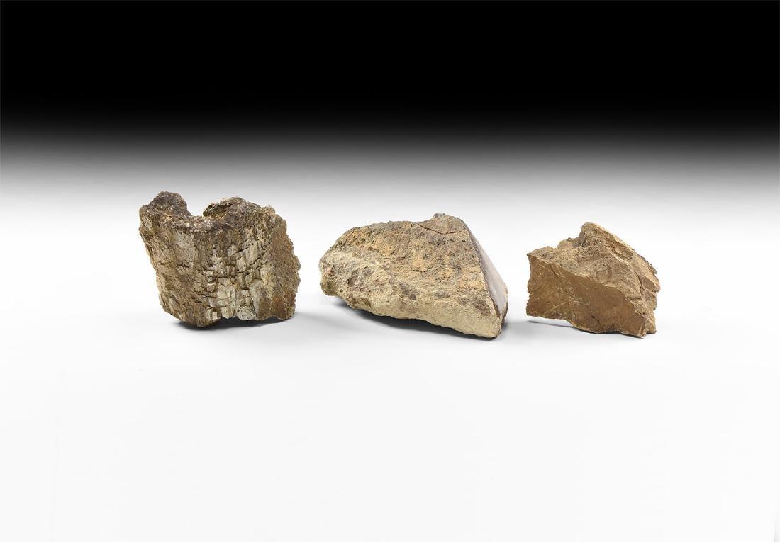 Natural History - USA Dinosaur Bone Group