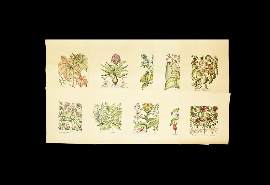 Hand Coloured Botanical Art Print Group