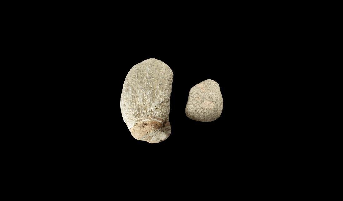 Natural History - Historic Fossil Bryozoan Colony