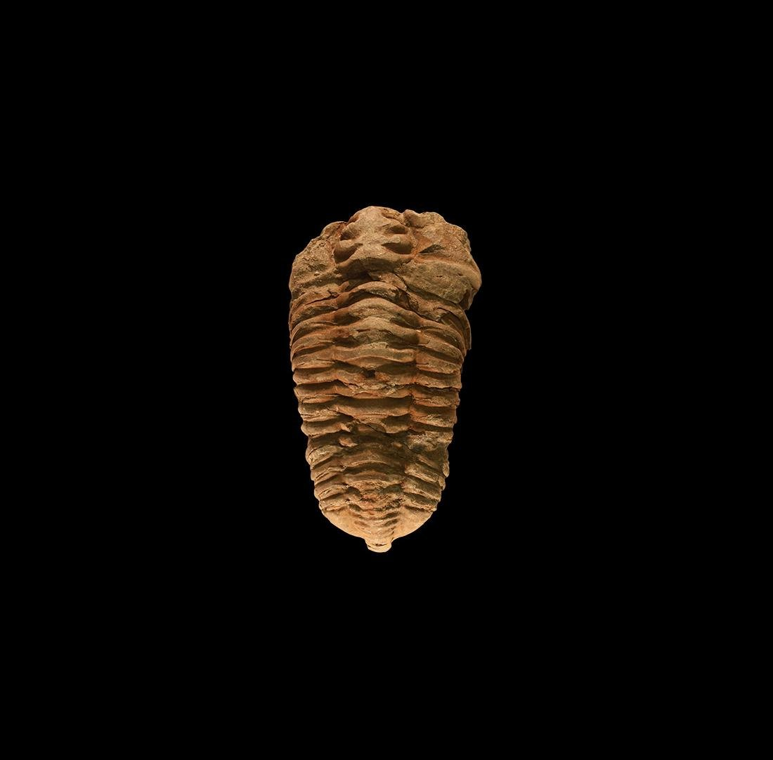 Natural History - Large Fossil Trilobite
