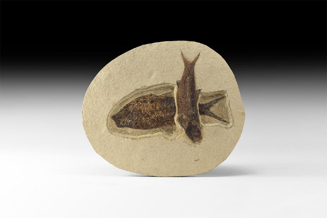 Natural History - Fossil Fish Group