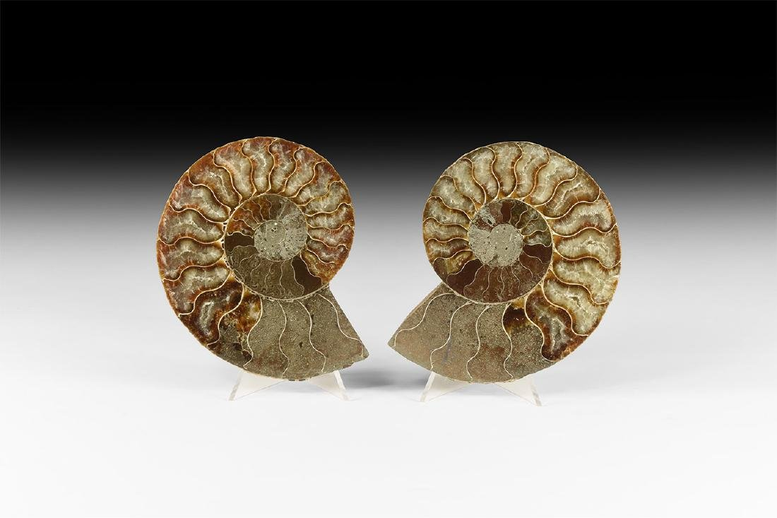 Cut and Polished Fossil Ammonite Pair