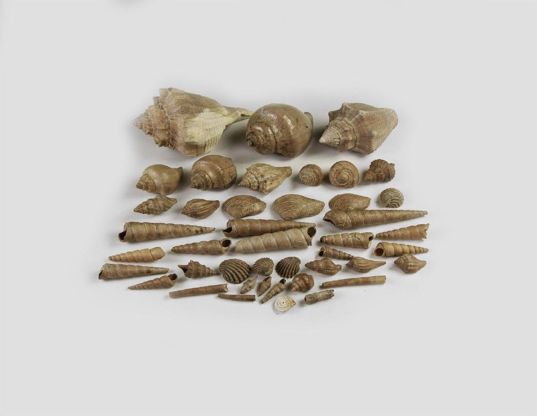 Fossil Gastropod Group