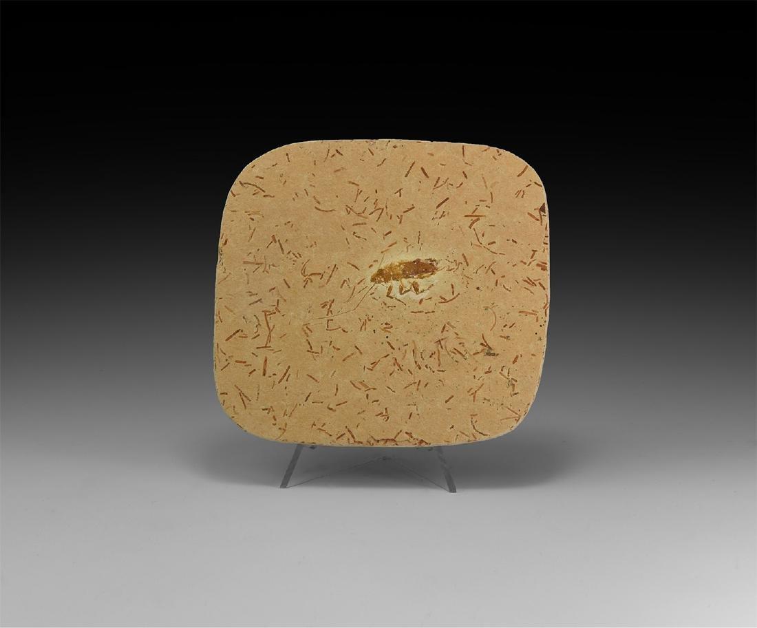 Natural History - Fossil Cricket