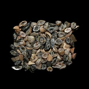 Cut Agate Geode Half Mineral Specimen Group [100]