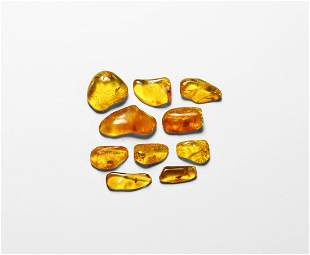 Insects in Baltic Amber Group