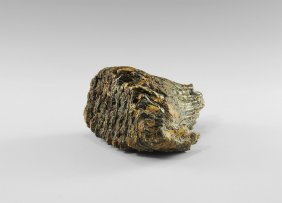 Natural History - Woolly Mammoth Tooth