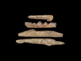Stone Age Bone Harpoon Group
