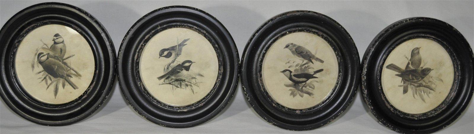 Decorative Framed Songbird Prints