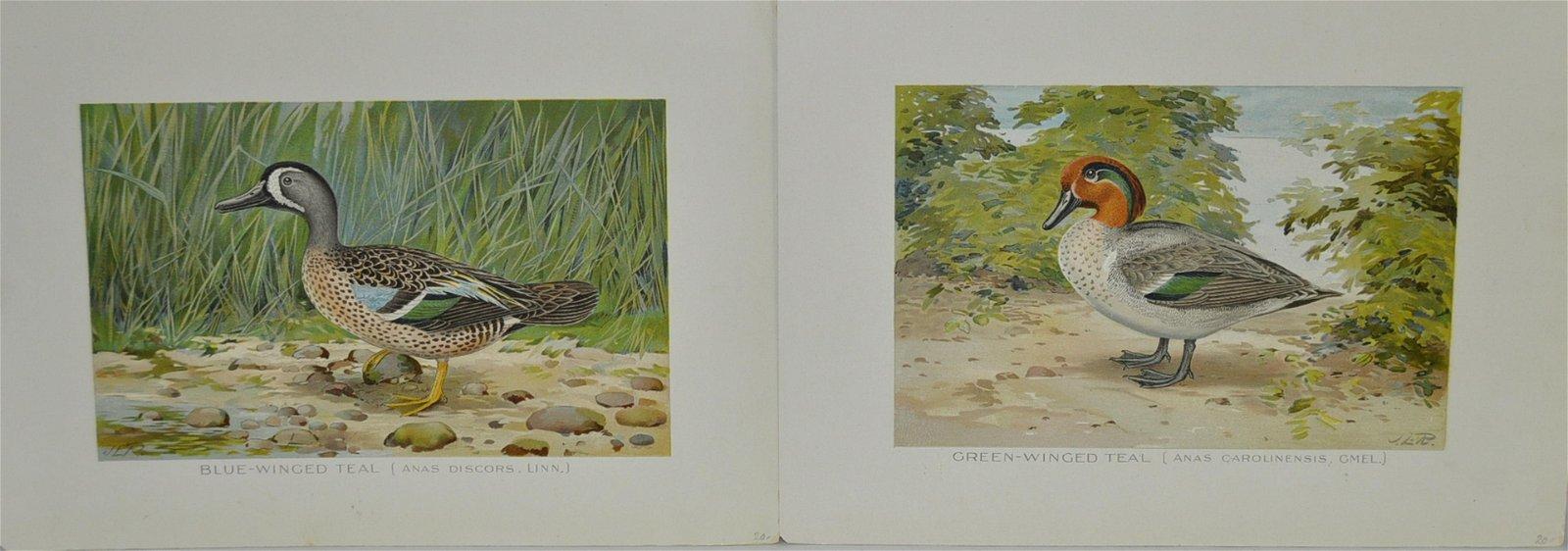 2 John L. Ridgway Antique Waterfowl Prints