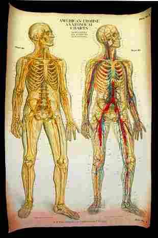 Anatomical Chart on linen