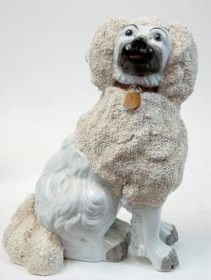 "50: Staffordshire spaniel with grainey ""poodle coat"""