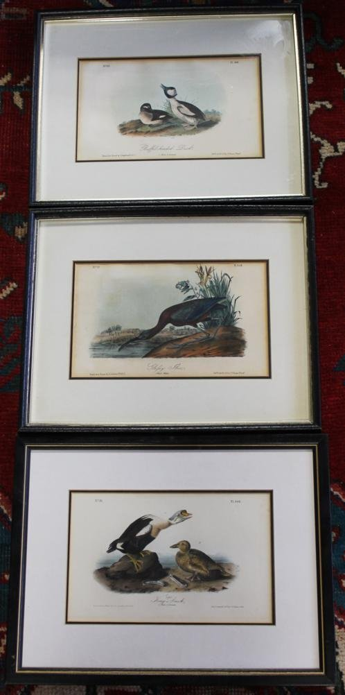 3: 3 JJ Audubon highly colored lithos drawn from nature