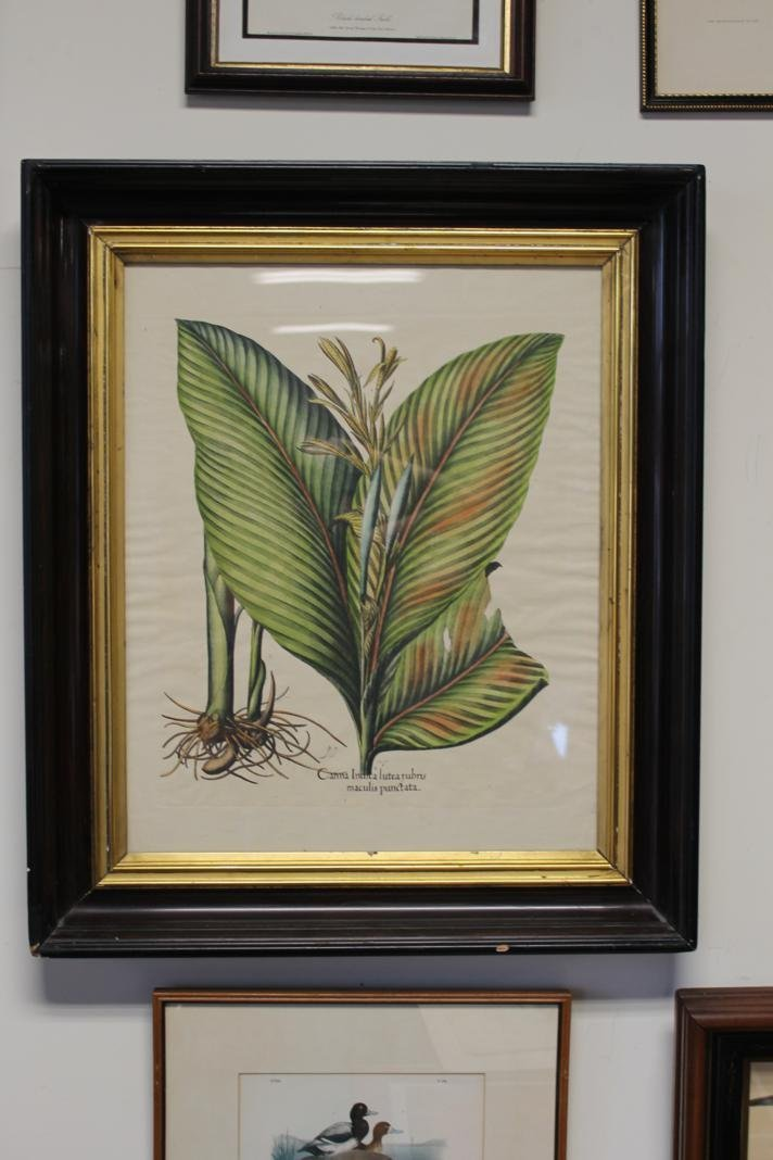 6: Highly colored and framed botanical litho. Late 1800