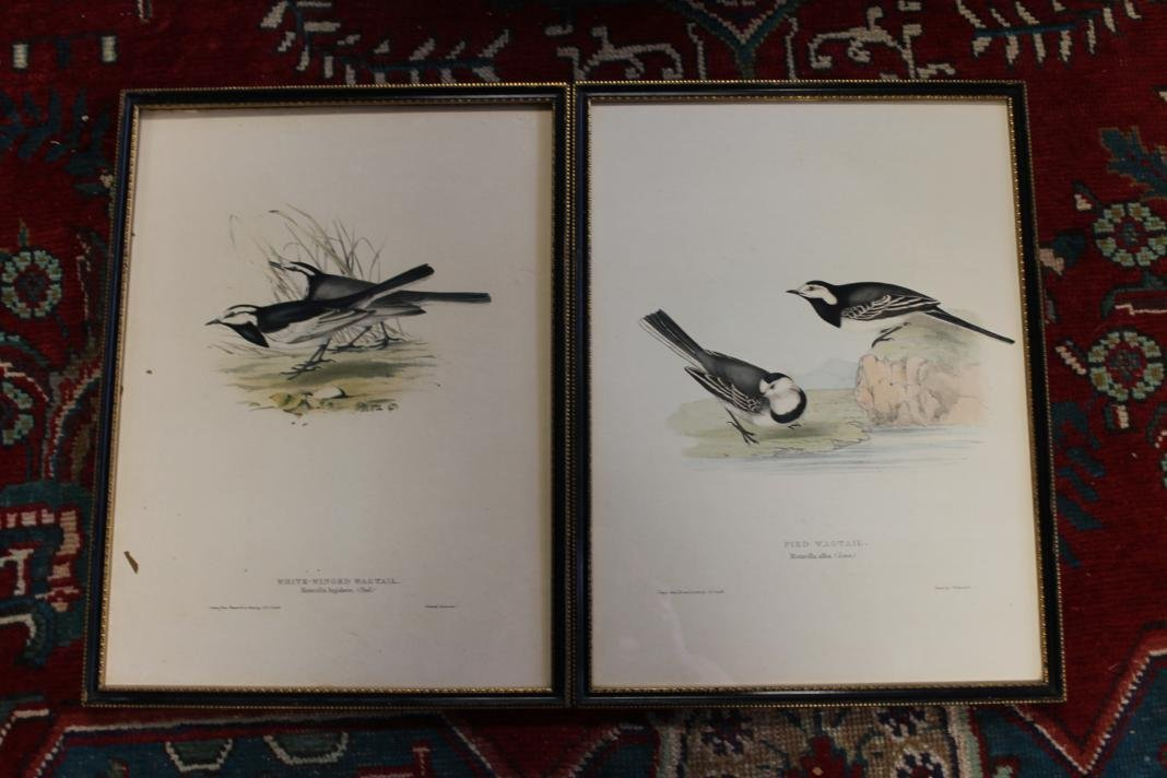 8: 2 J & E Gould lithos drawn from nature & on stone. P