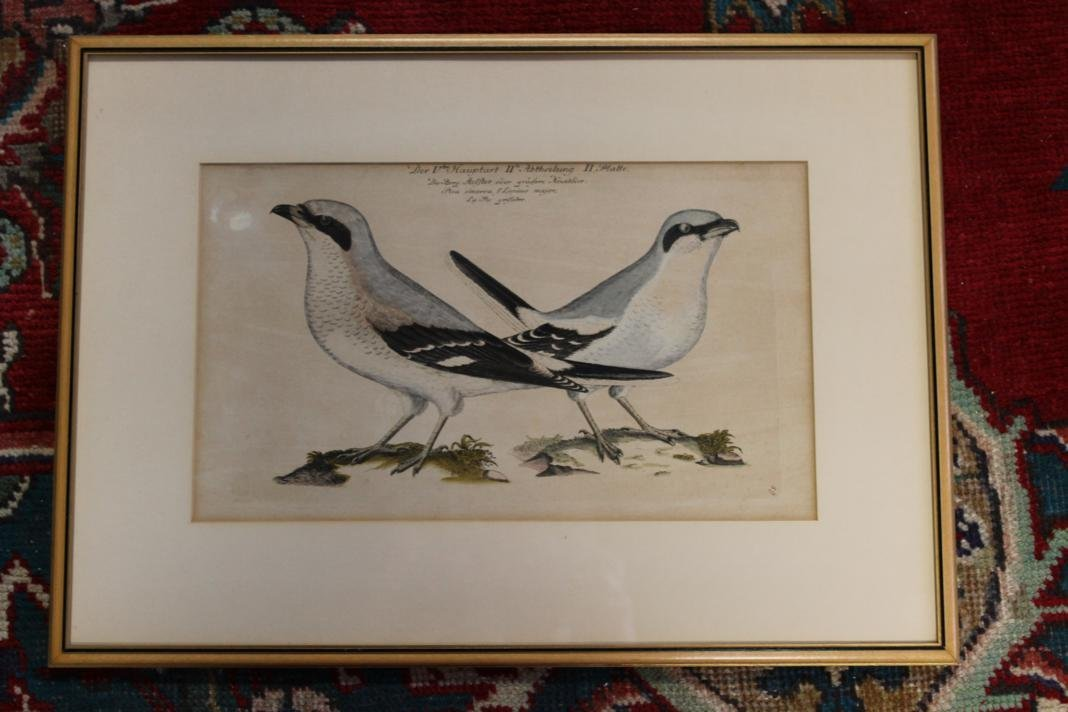 9: Der Vten Hauptart hand colored engraving of 2 birds