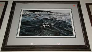 Original wildlife print of sea ducks by Van Gilder #689