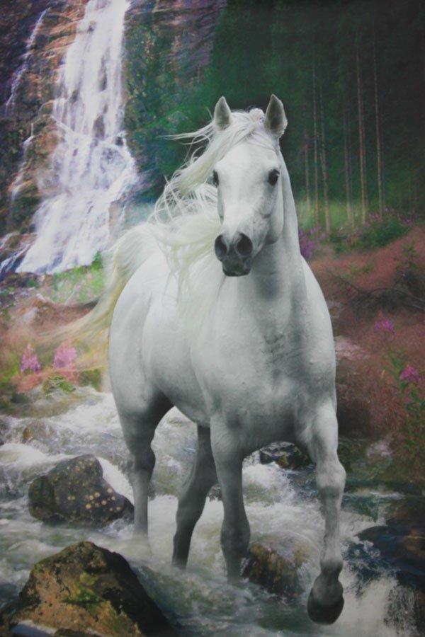 Beautiful white horse landscape