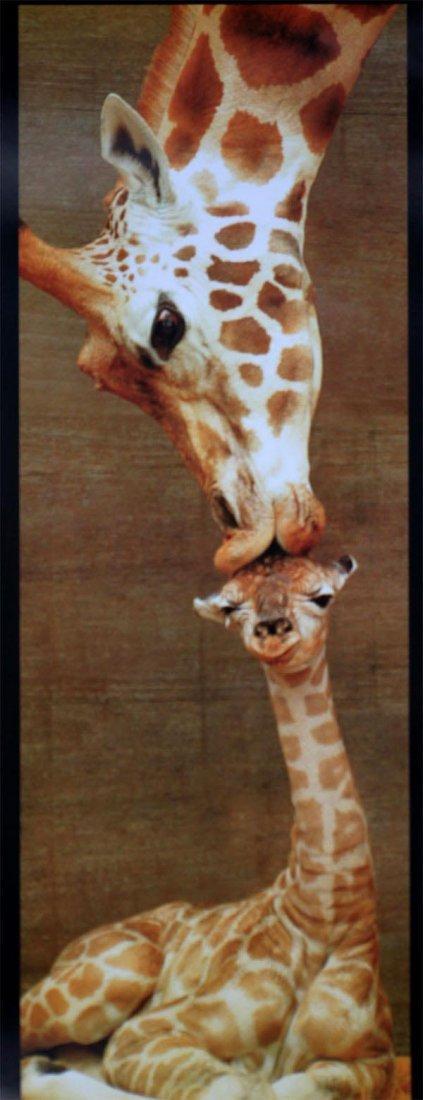 AMAZING ANIMAL IMAGE