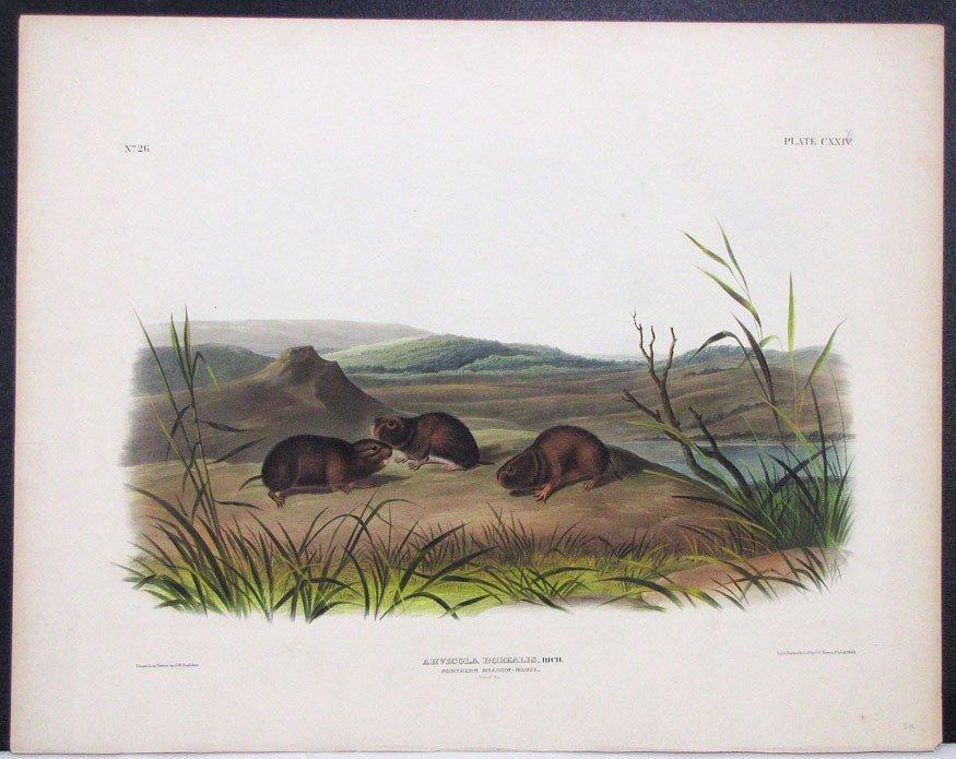 7: after JOHN WOODHOUSE AUDUBON (American, 1812-1862)