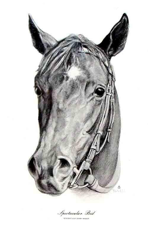 90278: Spectacular Bid Kentucky Derby Winner 1979 Portr