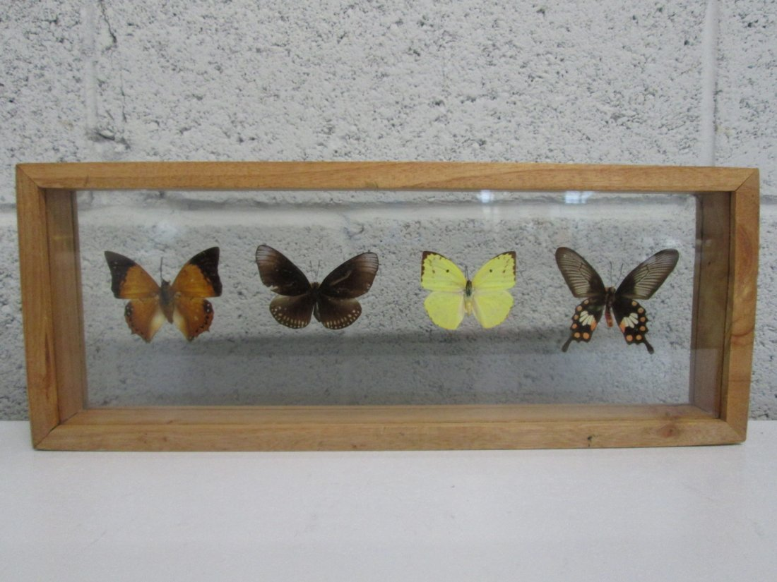 """6: Butterfly Wall Plaque with Wood Frame.  16""""W x 6""""H x"""