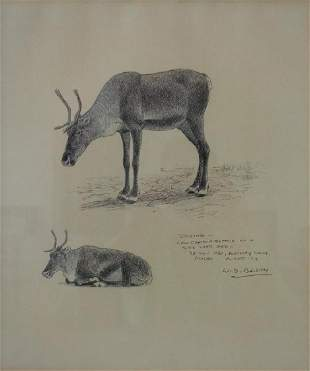 William D. Berry (1926-1979) Drawing, Cow Caribou