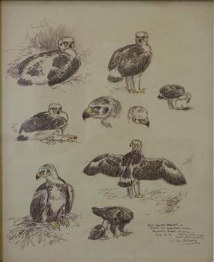 William D. Berry (1926-1979) Drawing, Young Eagles