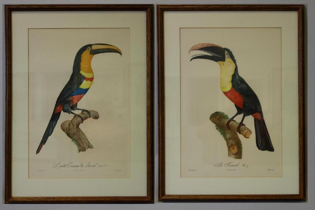 Jacques Barraband Toucan Engravings 9 & 10