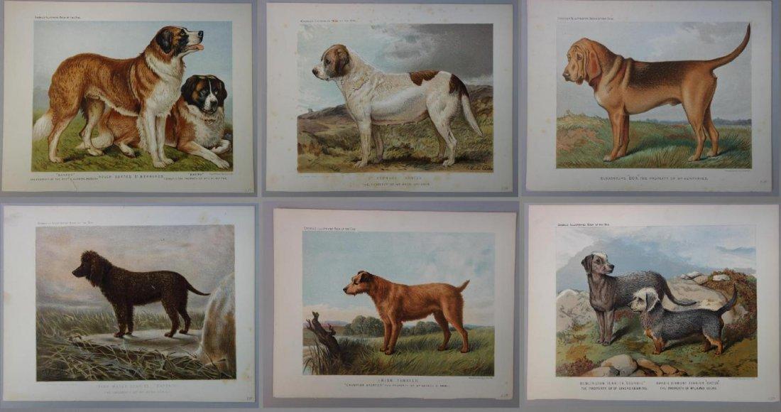 6-19thc Cassell's Chromolithograph Dog Prints