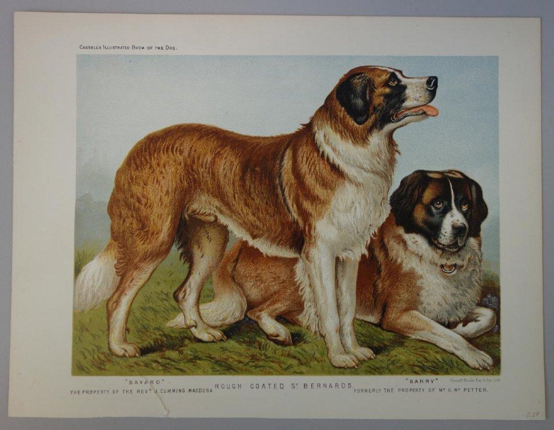 6-19thc Cassell's Chromolithograph Dog Prints - 2