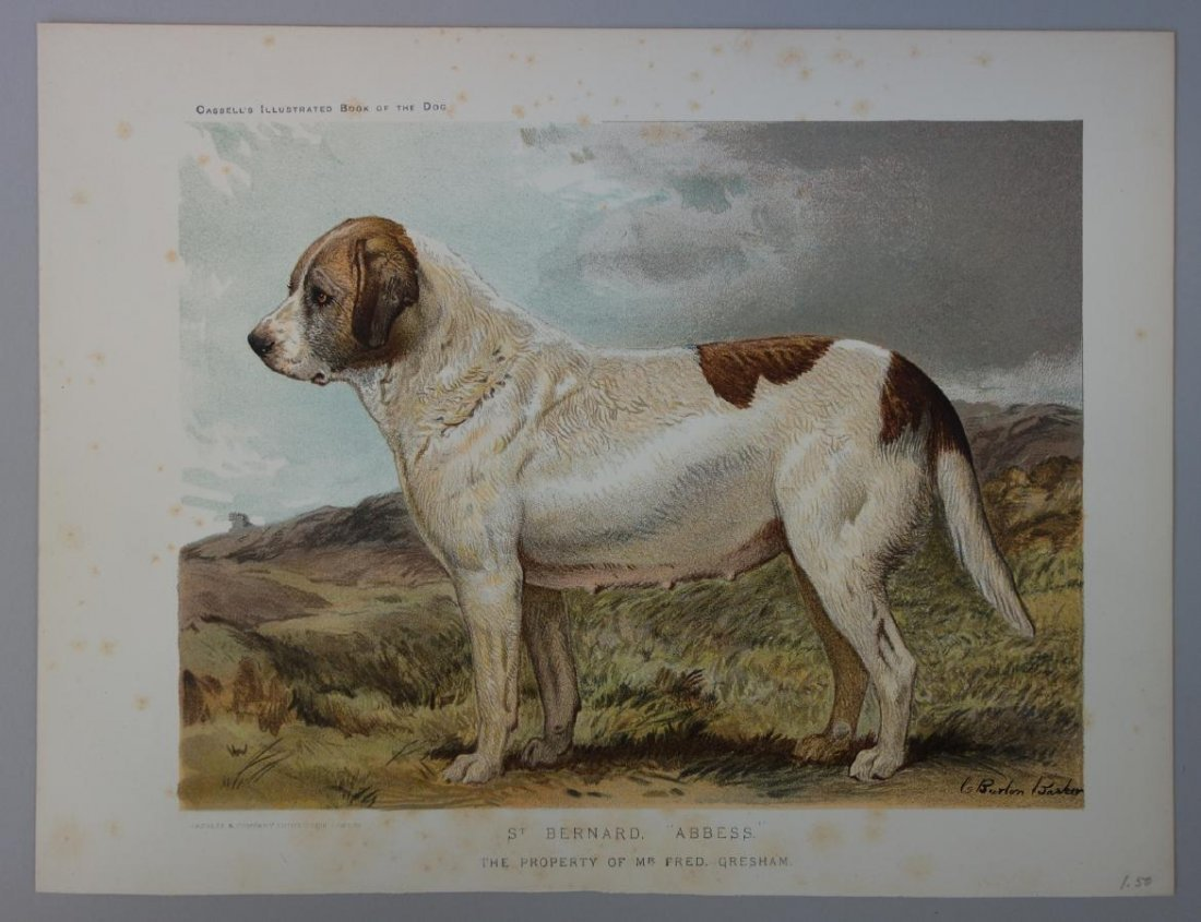 6-19thc Cassell's Chromolithograph Dog Prints - 3