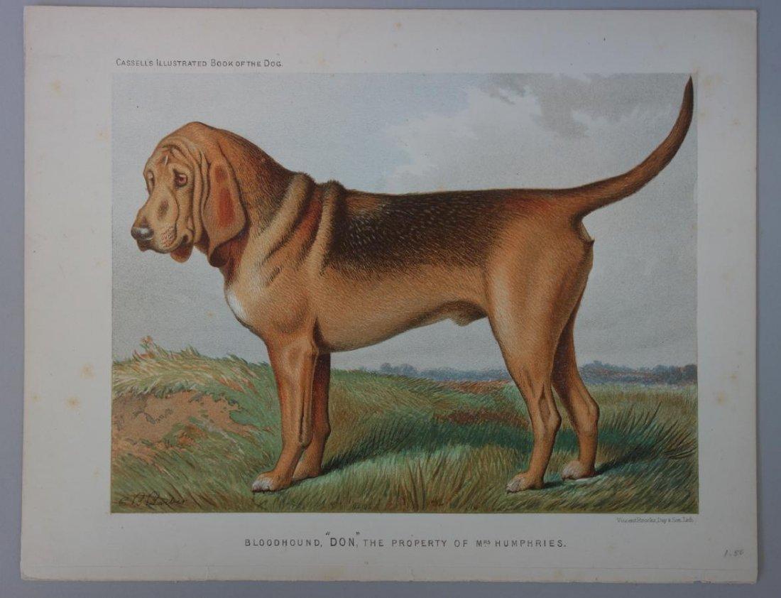 6-19thc Cassell's Chromolithograph Dog Prints - 4