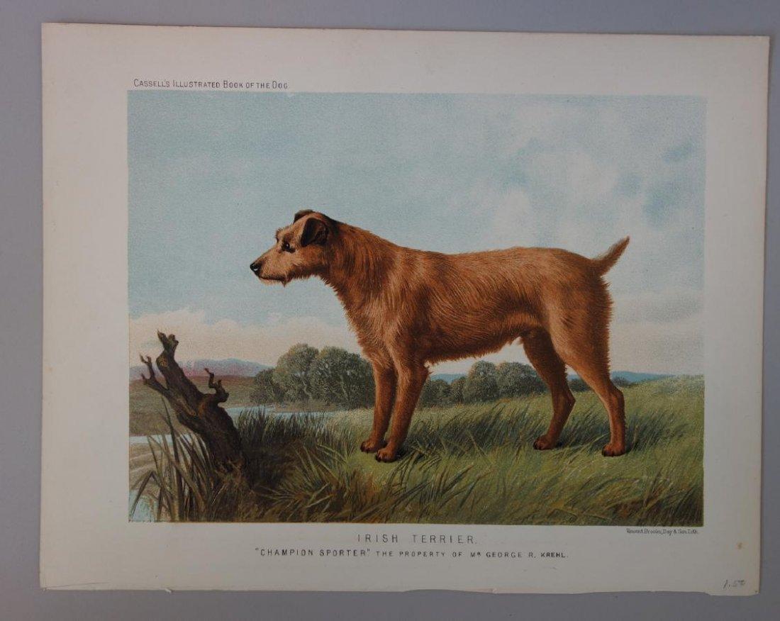 6-19thc Cassell's Chromolithograph Dog Prints - 6