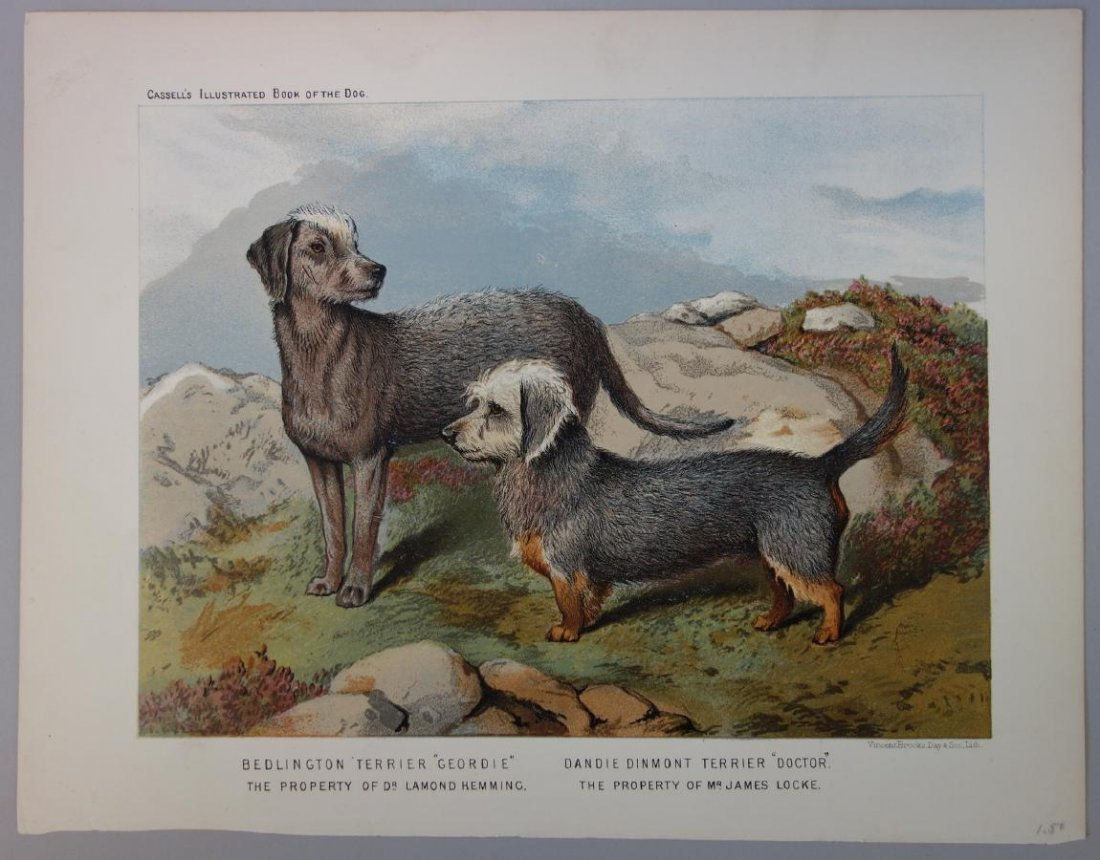 6-19thc Cassell's Chromolithograph Dog Prints - 7