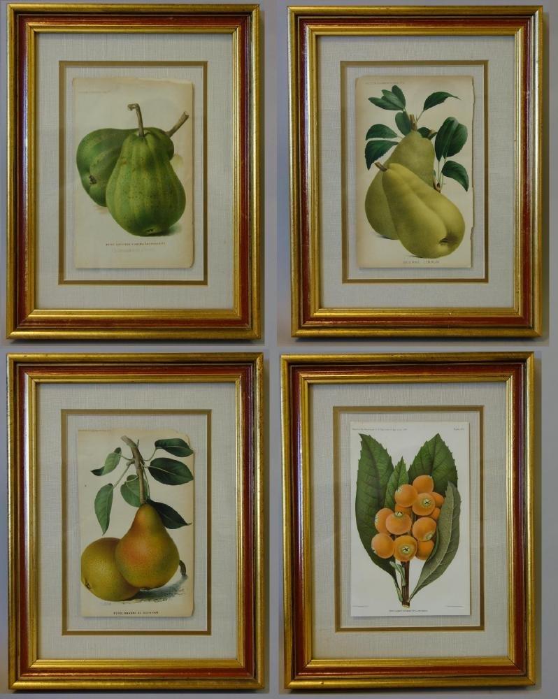 4 Framed Fruit Botanicals, Bulletin Arboriculture