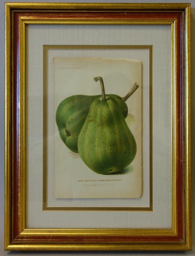 4 Framed Fruit Botanicals, Bulletin Arboriculture - 2