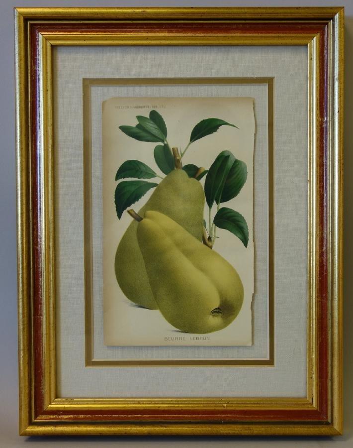 4 Framed Fruit Botanicals, Bulletin Arboriculture - 3