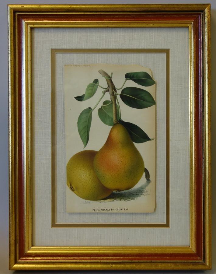 4 Framed Fruit Botanicals, Bulletin Arboriculture - 4