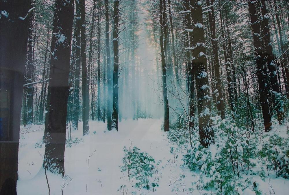 Michael Tischler, Winter Landscape Photograph